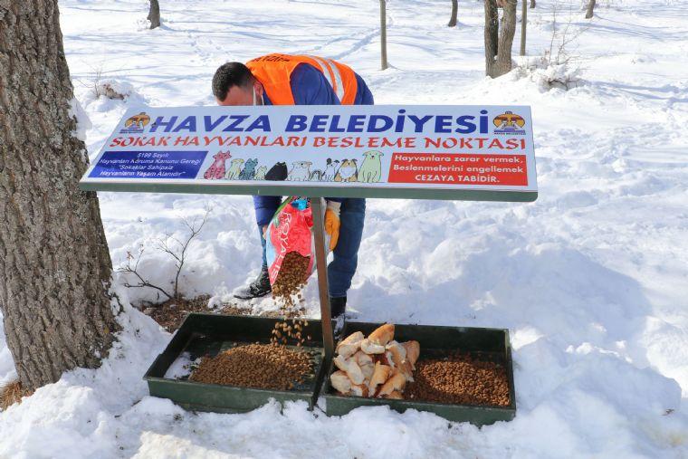 Havza Belediyesinden Sokak Hayvanlara Mama Desteği